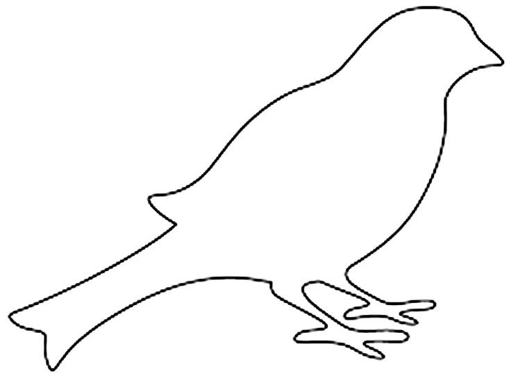 Modelo de passarinho
