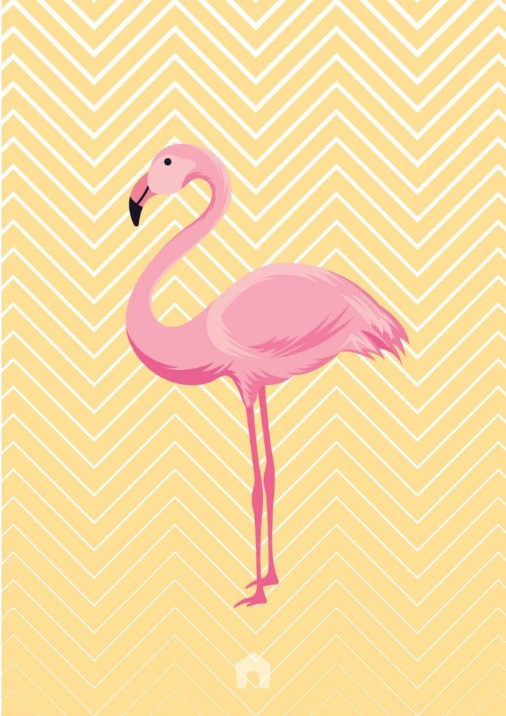 Cadres Flamingo