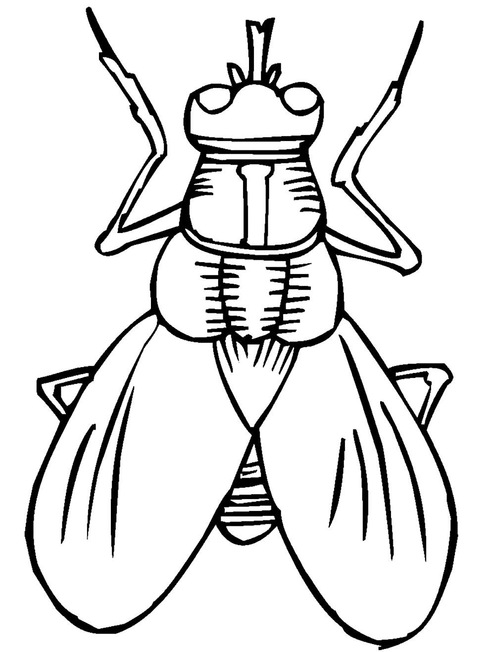 Imagem de inseto para pintar