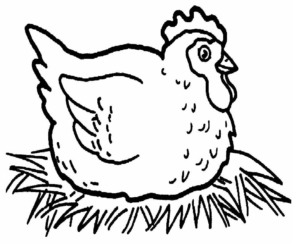 Desenho de galinha para colorir