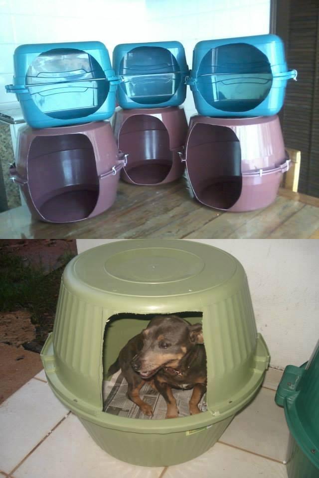 Belle aile pour chiens et chats avec bassins recyclés