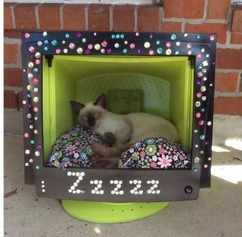 maison pour chiens et chats