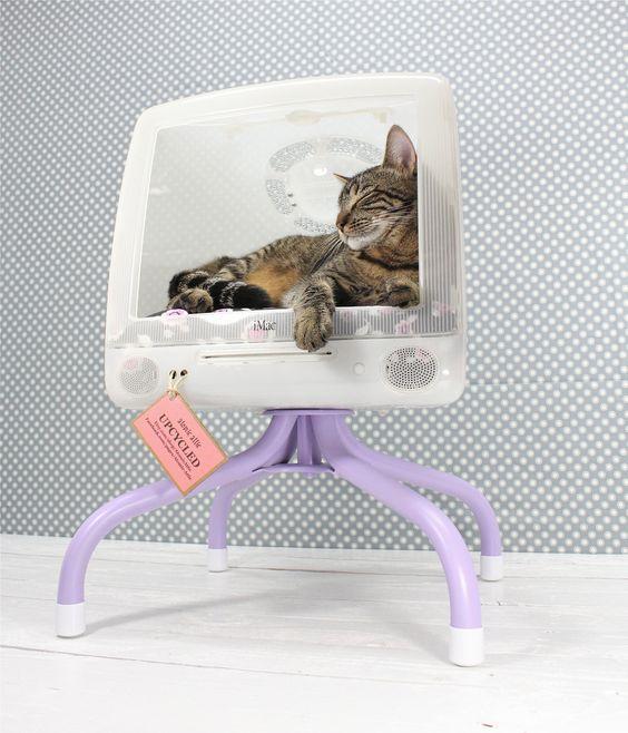 maison pour chat avec moniteur