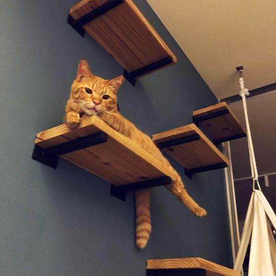 décoration pour chats