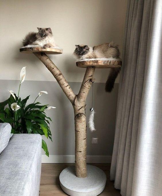 étagères pour chats