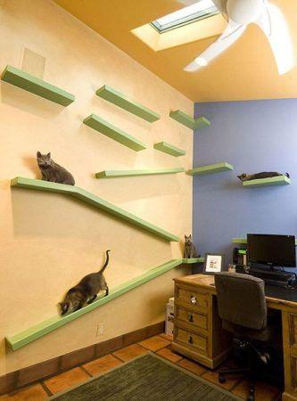 circuit rampe pour chats