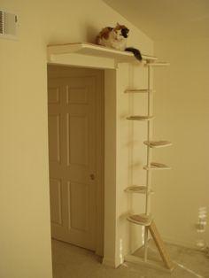Niches et étagères pour chats