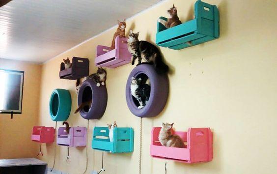 jouets pour chats avec palettes et pneus