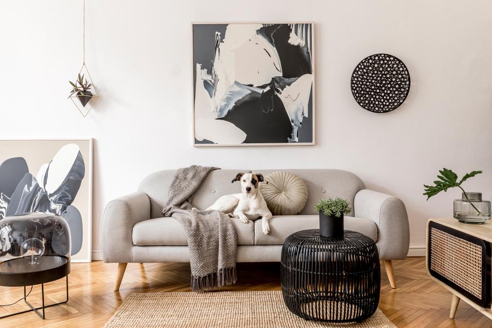 Séjour avec parquet.  Table d'appoint de fibres noires à l'avant avec vase noir avec plante.  Canapé gris avec couverture sur le coin gauche et chien blanc et marron couché au centre.  Cadre abstrait bleu marine et blanc sur le mur