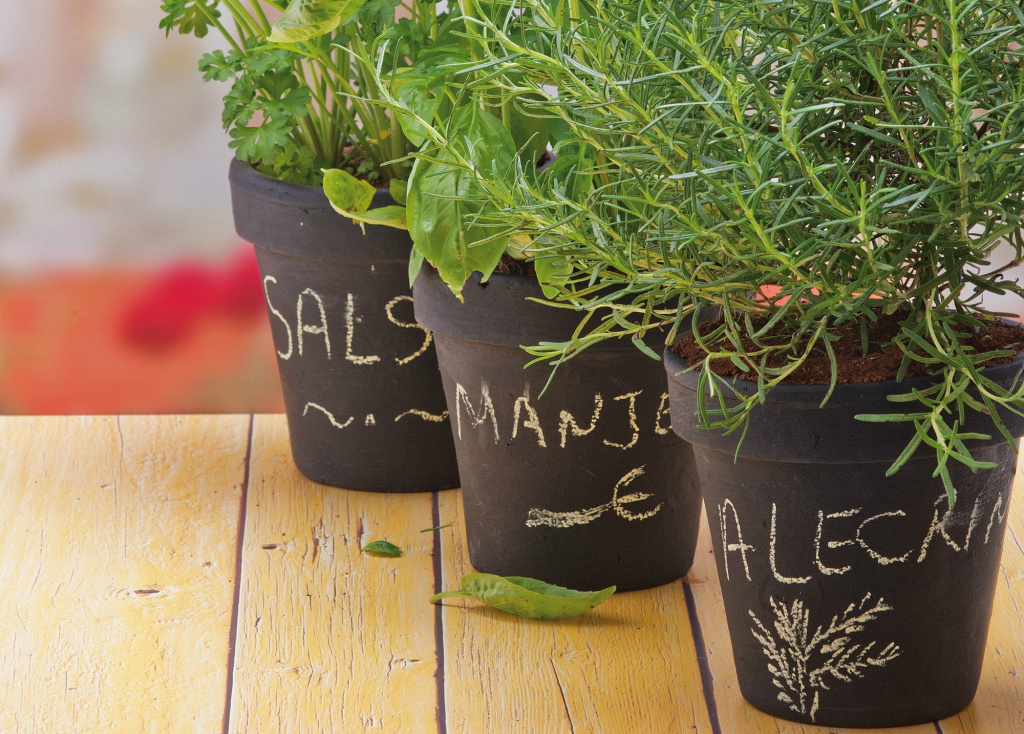 Vase végétal décoré de peinture pour tableau noir et nom de la plante écrit à la craie.